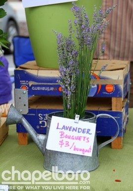 Lavender from Waterdog Farms