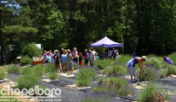 Tours of the lavender farm were available throughout the day