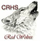 cedar ridge red wolf smaller