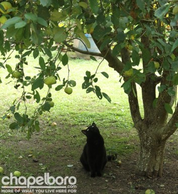 Margareta was busy playing under the apple tree