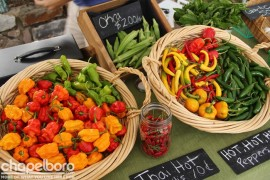 Wonderful peppers from Rocky Fun Farm
