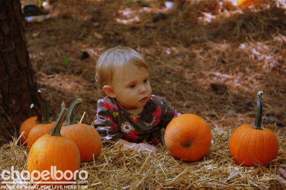 Ellie Faith carefully chooses her pumpkin!